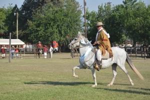 caballo-peruano-de-paso